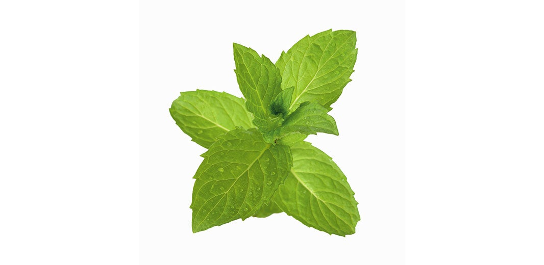 Ingredient_Peppermint_alt