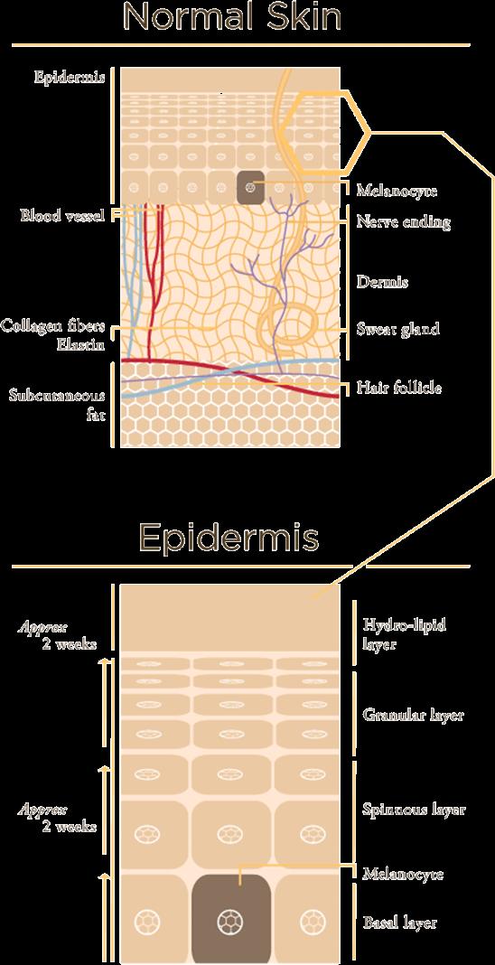 layer-skin