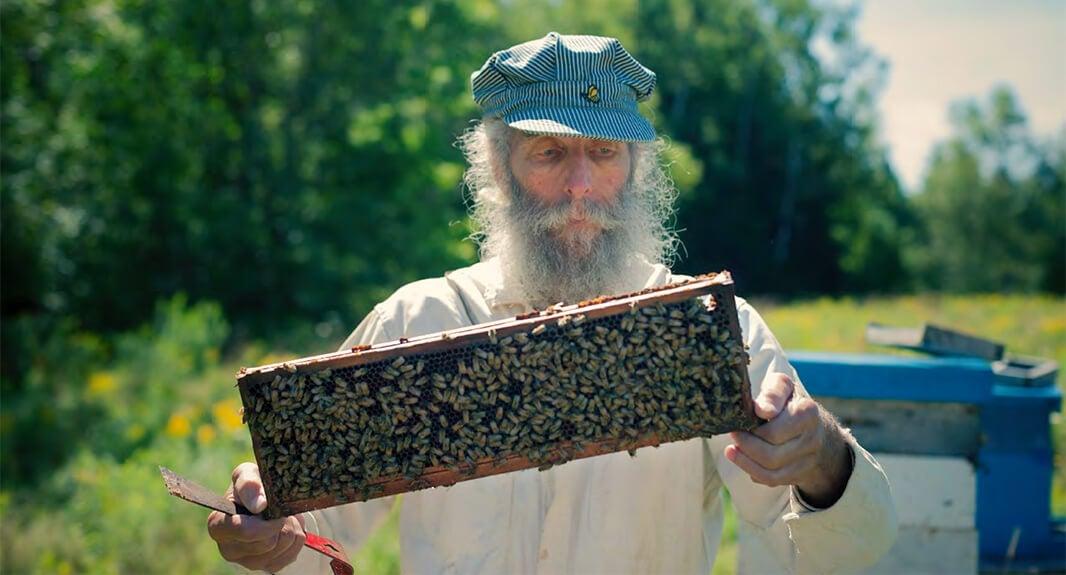 love-bees