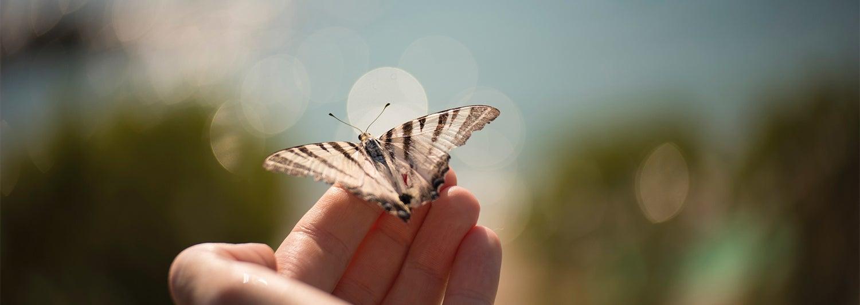 1070454248_GTY_RF_Butterfly_16-04-19-1529_1500x533