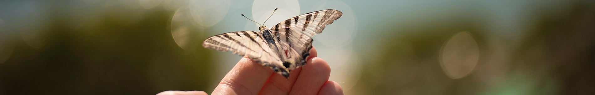 imagen-header-nota-mariposa