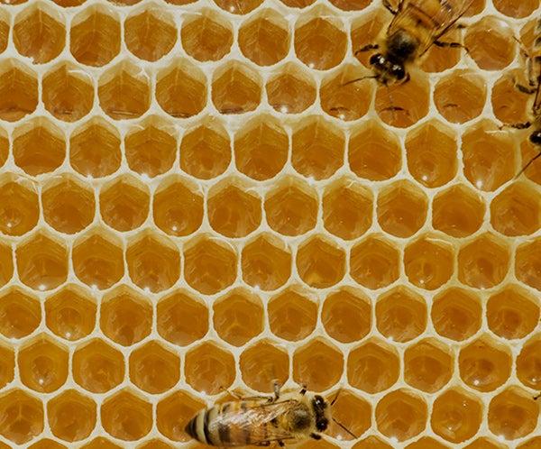 thumbnails-notas-abejas